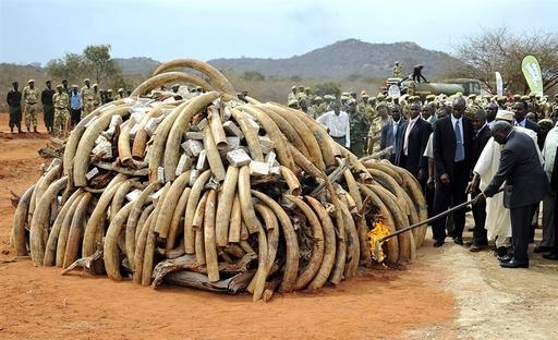 Kenya Poachers Kill 11 Elephants In Worst Attack